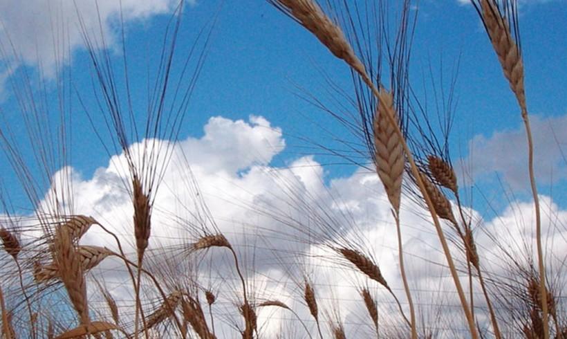Cooperativa Agricola GIROLOMONI: oltre il biologico