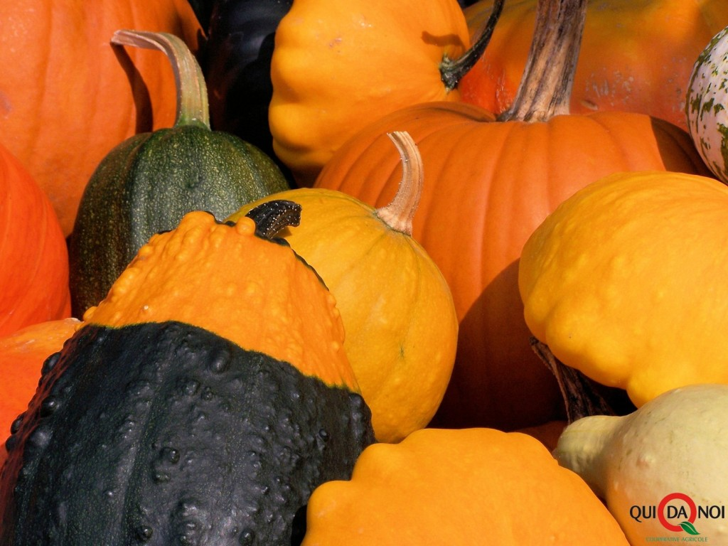 stockvault-colorful-pumpkins-in-fall106329