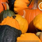 Dott.ssa Anastasia Grimaldi: bentornato autunno!