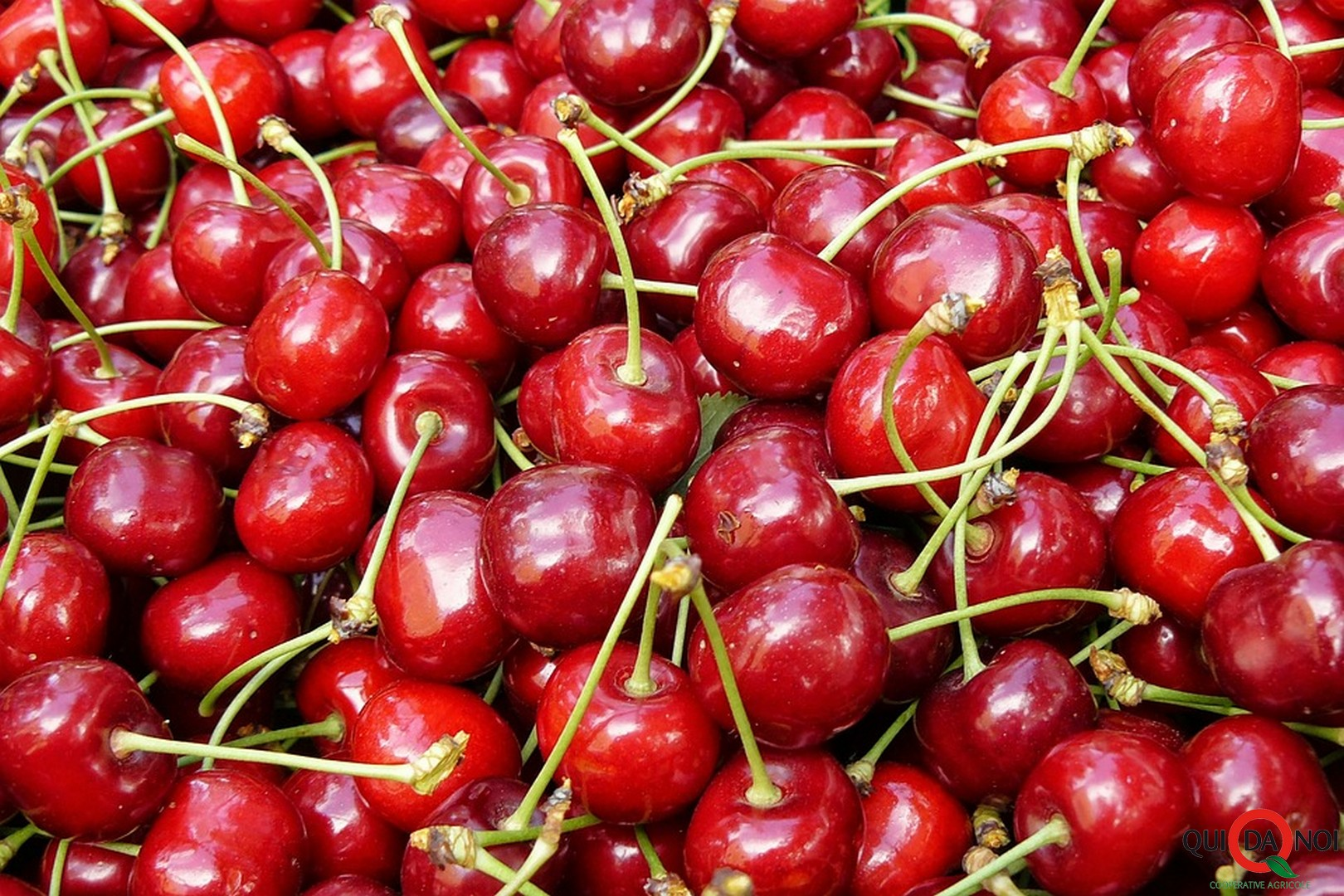 cherries_arcobaleno