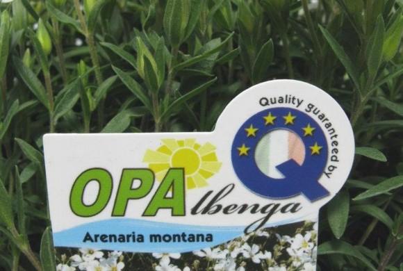 OPAlbenga: fiori e piante aromatiche della Riviera Ligure