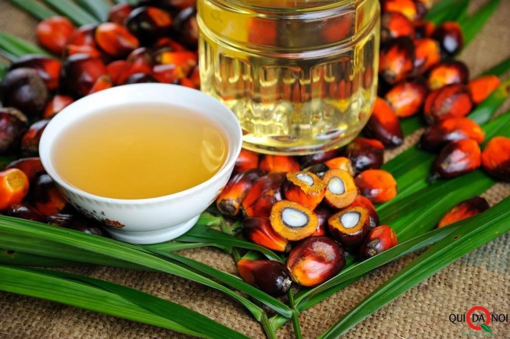 olio di palma_olio_salute_an