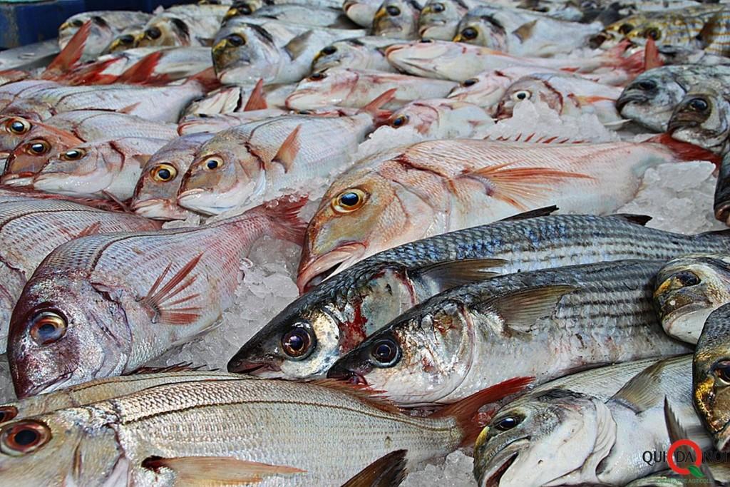 pesce_dieta-da-rientro