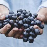 Alleanza delle Coop.ve Italiane-Agroalimentare e AssoDistil: il vino per produrre igienizzanti