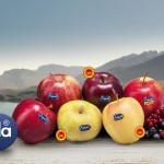 Trentino. Produttori agricoli, vitivinicoli e allevatori uniti nel nome della solidarietà