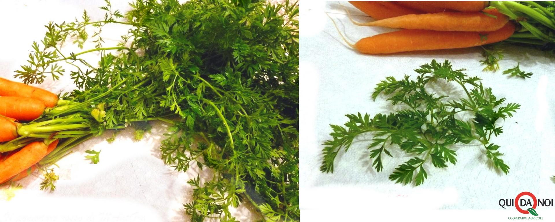 Frittata di foglie di carote step- Grassi