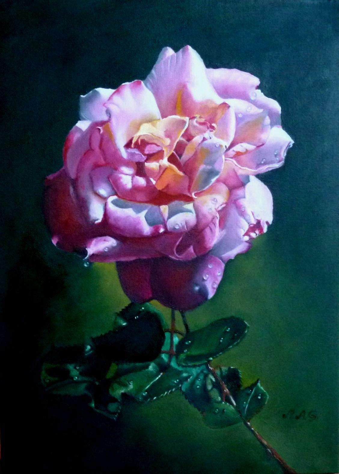 Rosa rosa omaggio ad Antonov-Grassi