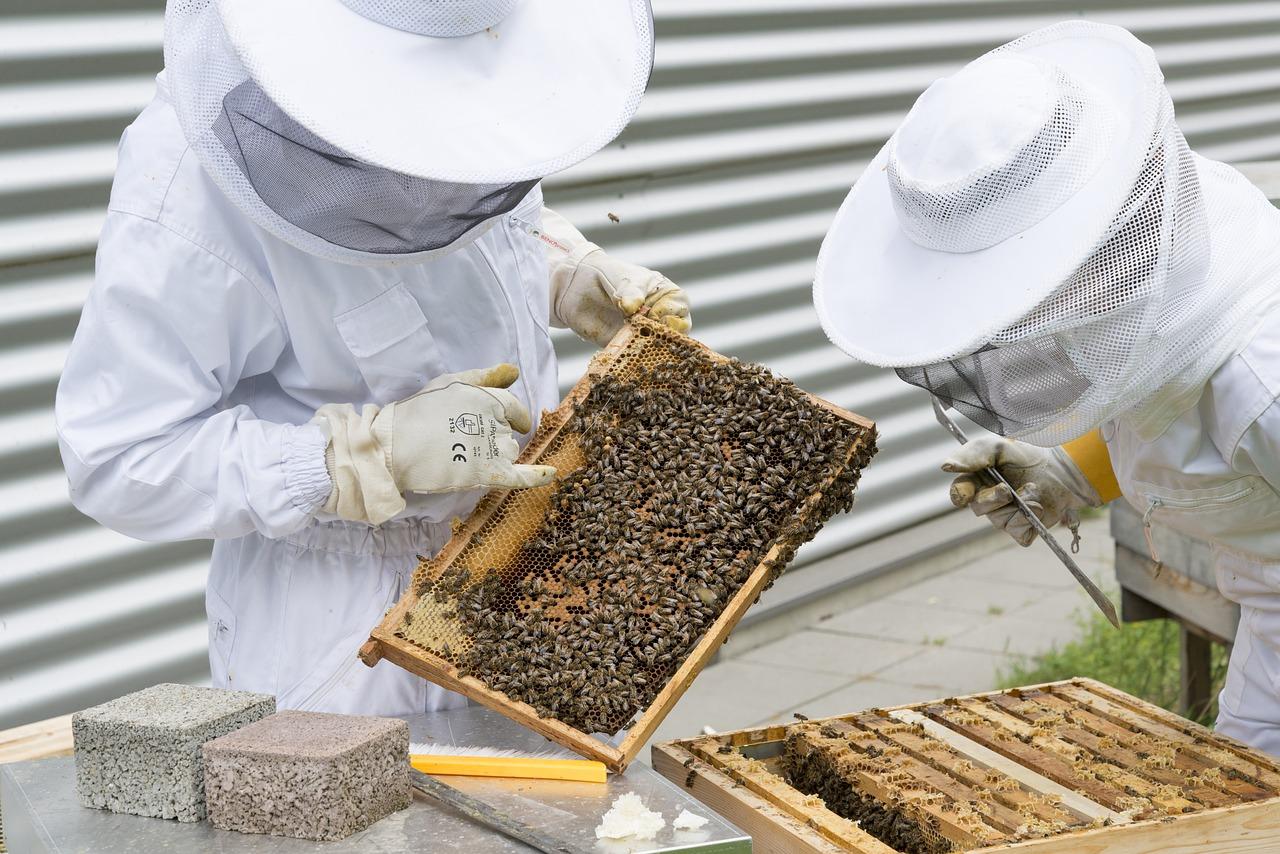 beekeeper-2650663_1280