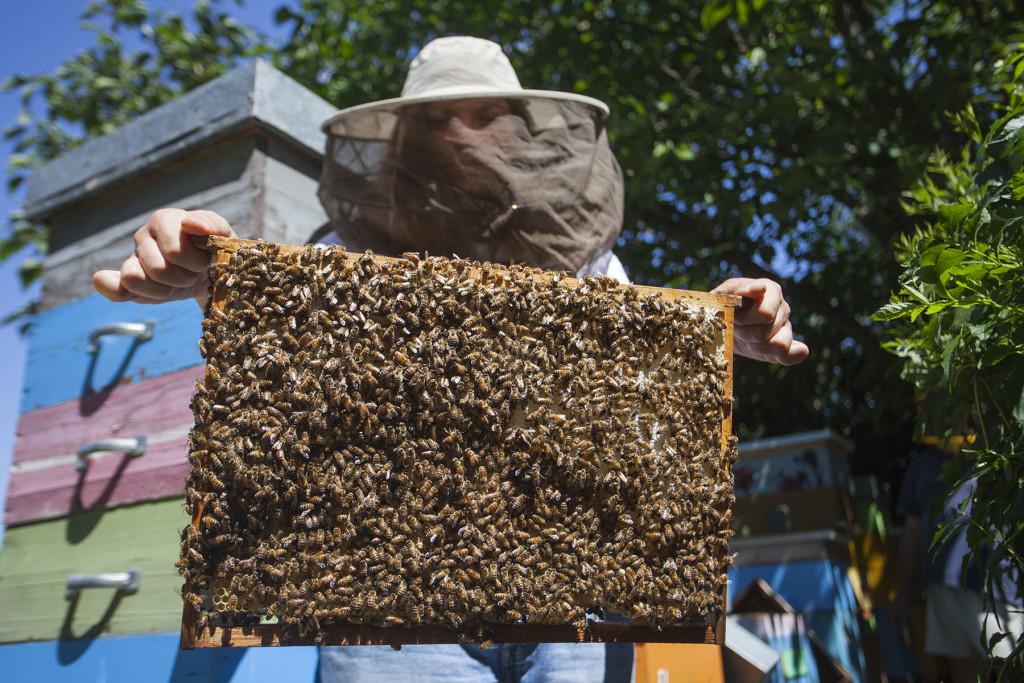 Valetina Rotatori, apicoltrice