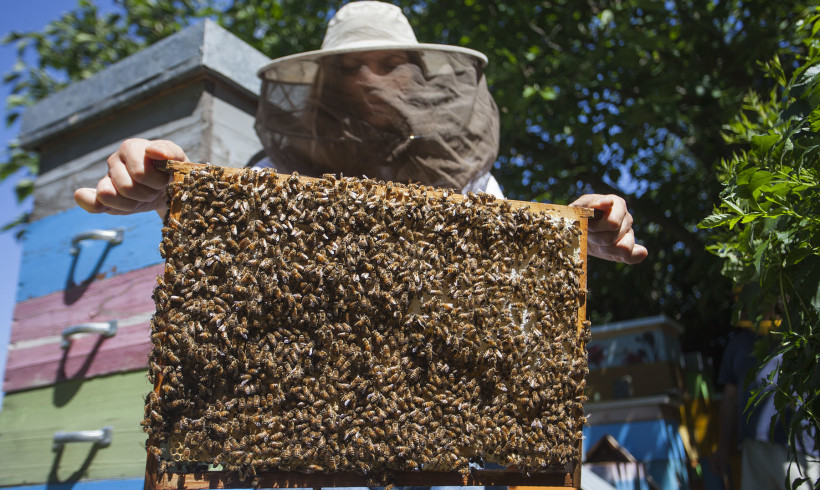 Giornata mondiale delle Api. Il contributo delle donne in apicoltura