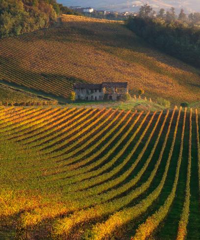 In Vespa nel cuore vitivinicolo dell'Oltrepò Pavese
