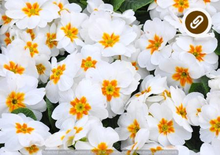 Ricette a base di fiori: quando il giardinaggio si unisce al gusto