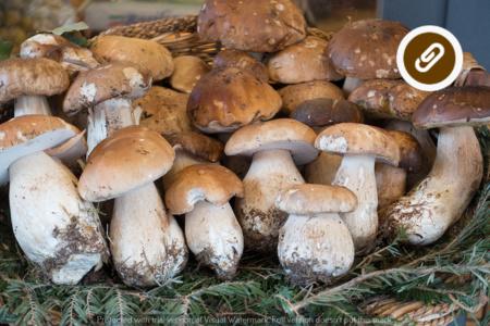 Andar per funghi. Tradizione e saperi popolari