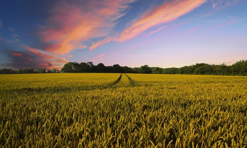 """""""Spighe verdi"""" alle località italiane che promuovono uno sviluppo rurale sostenibile"""