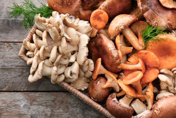 Il 2021 è l'anno dei funghi
