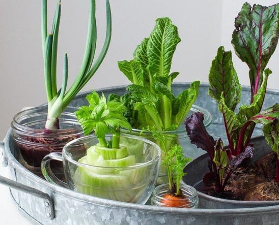 10 verdure da far crescere a casa partendo dagli scarti