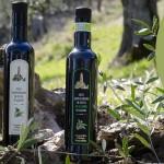 Cooperativa Oleificio Pozzuolese. Presentazione e degustazione Olio Novello 2021: Domenica 17 Ottobre